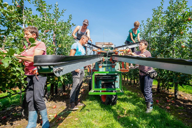 Sivani-Boxall-Germany-apple-picking